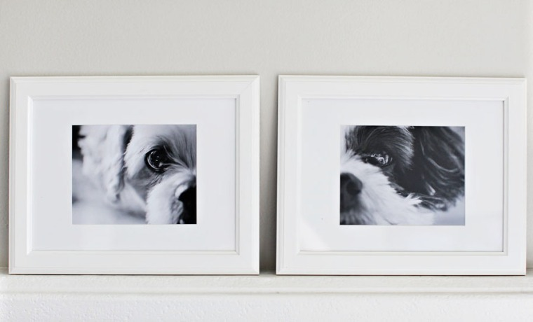 Diy Dog Wall Decor : Pet portraits diy wall decor family photos framing