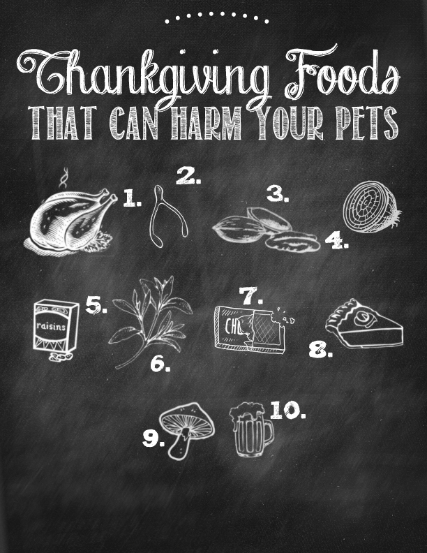 Thanksgiving Foods that are harmful to pets