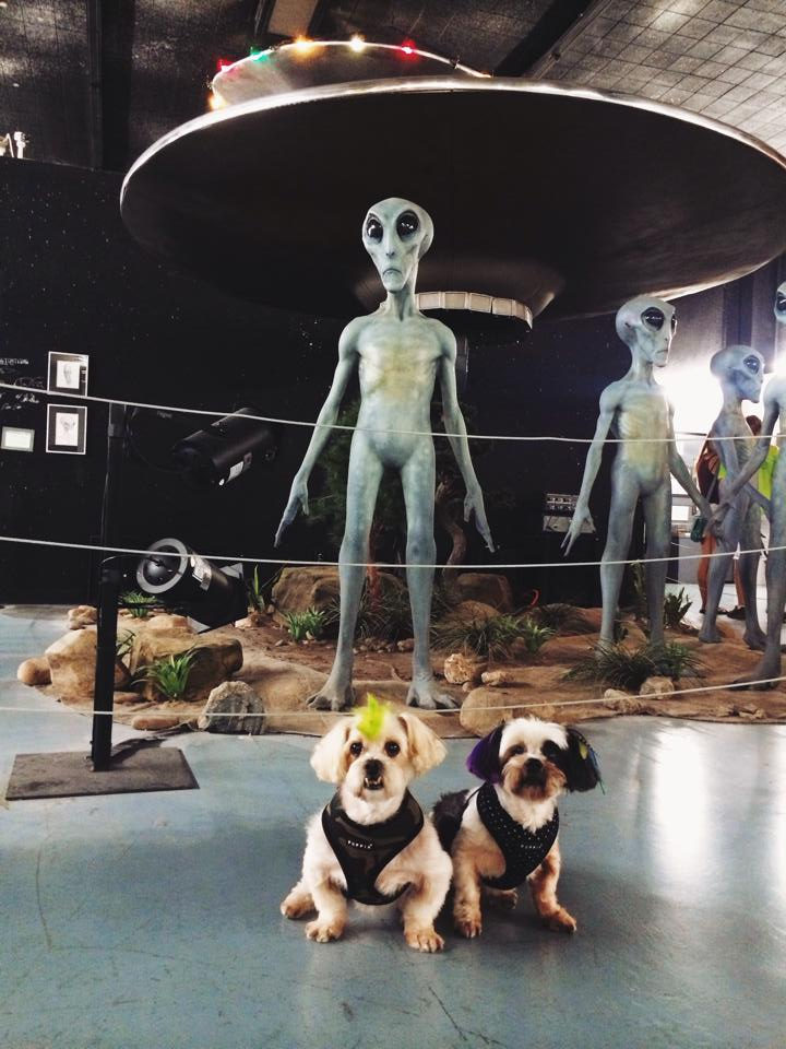 UFO Museum and Research Center in Roswell. SUPER dog friendly for road trippers!