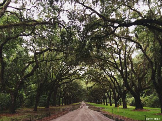 Savannah Wormsloe Plantation