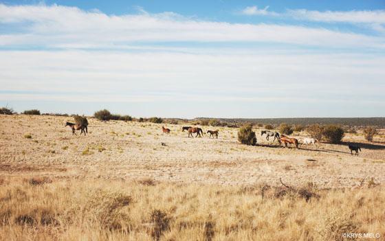Wild Horses in Arizona Summer Roadtrip