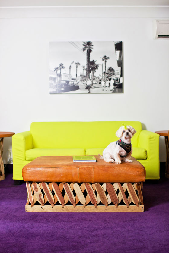 The Saguaro Palm Springs is very dog friendly.