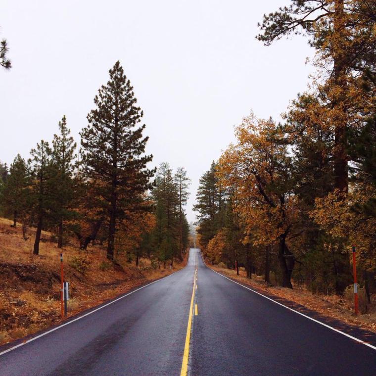 San Bernadino National Forrest in November