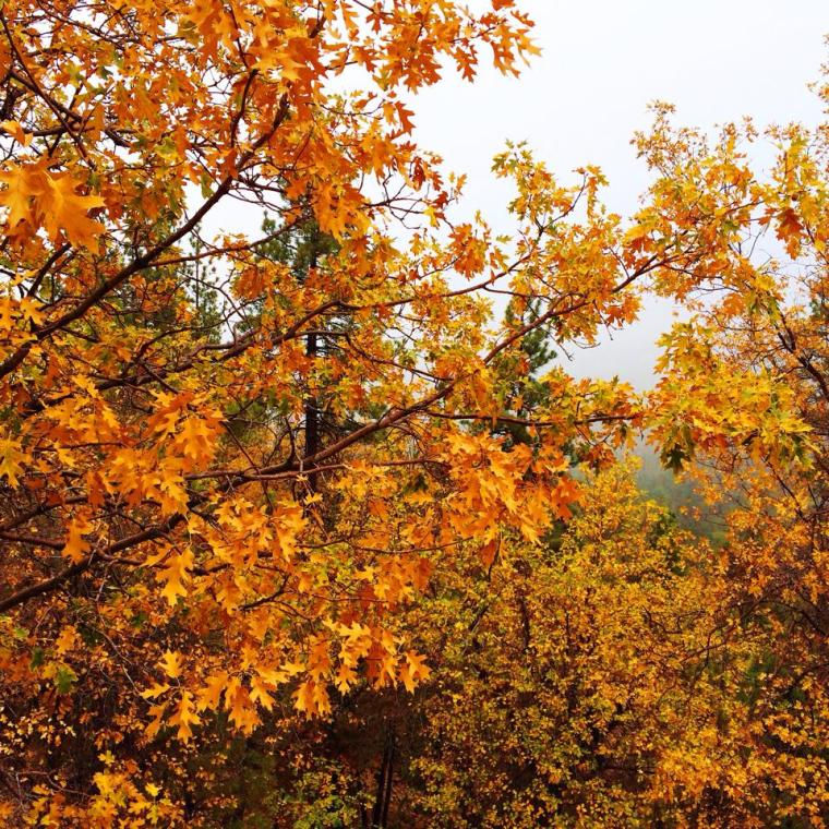 Where to see fall foliage in Southern California