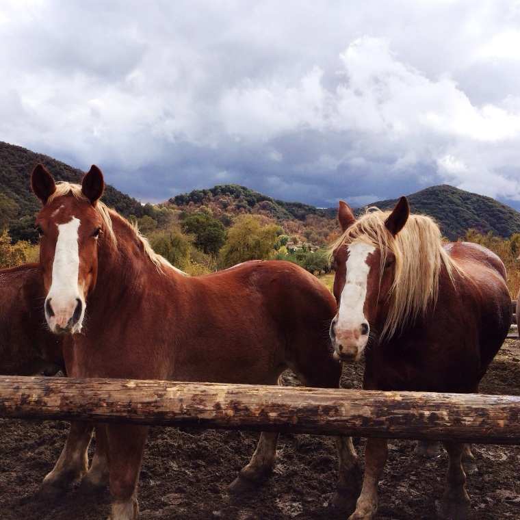 horses at los rios rancho
