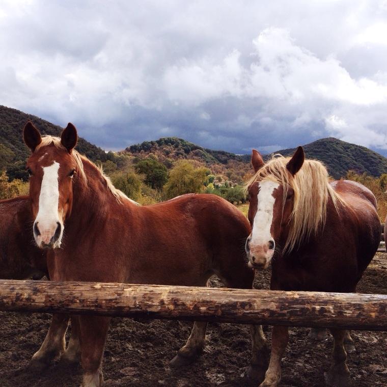 horses at los rios rancho