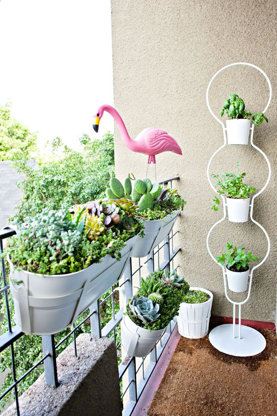 Apartment Balcony Succulent and Cacti Garden – Melodrama