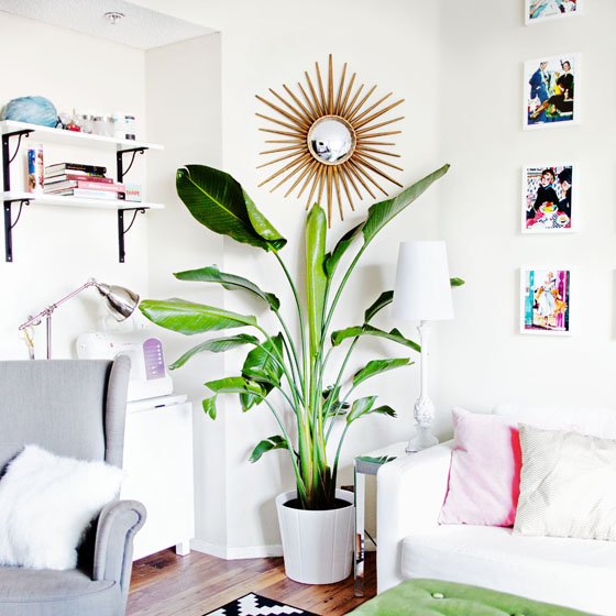 Apartment Decorating with Indoor Birds of Paradise