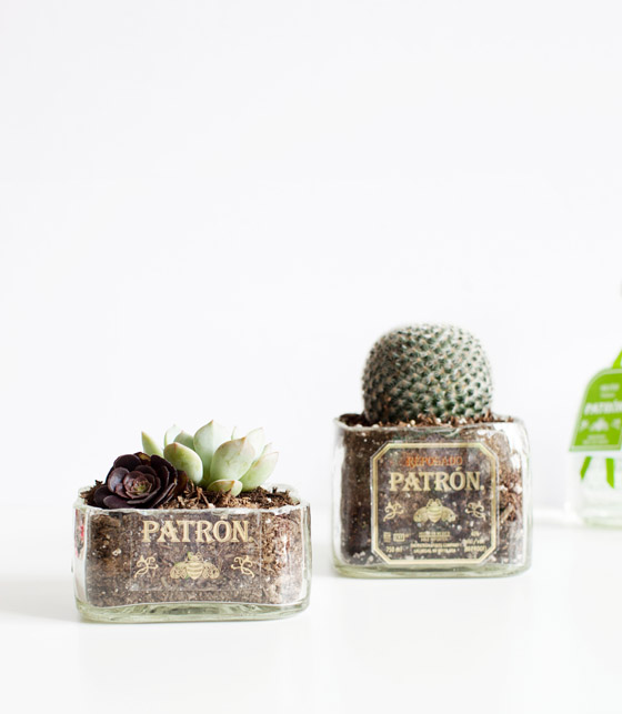 Succulent planters made out of Patron bottles for #ArtofPatron bottle art contest