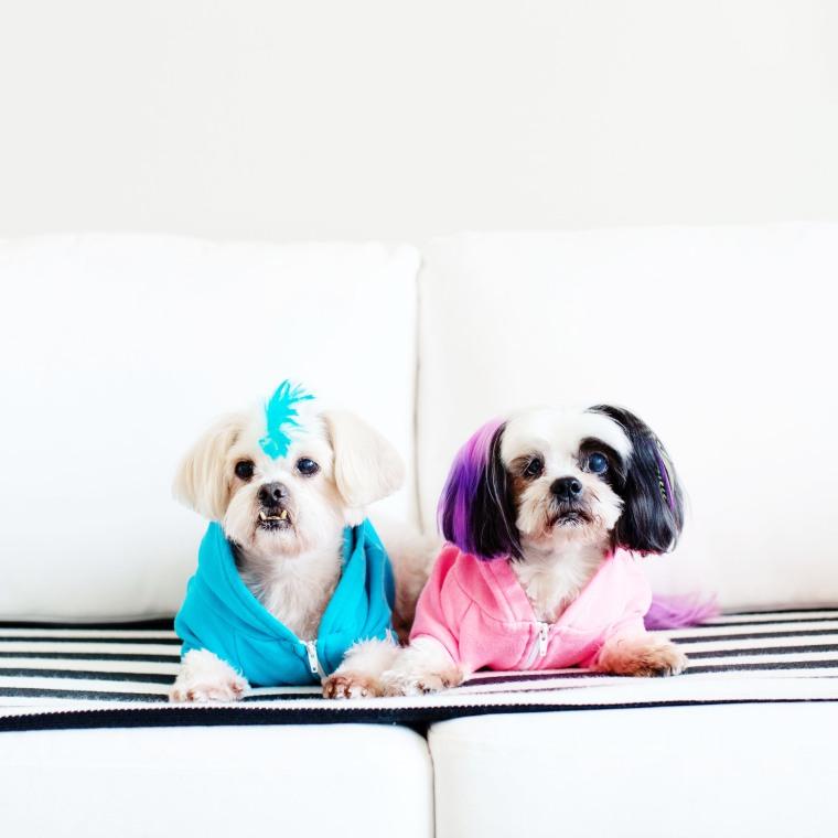 5 Awesome Senior Dog products via Melodrama