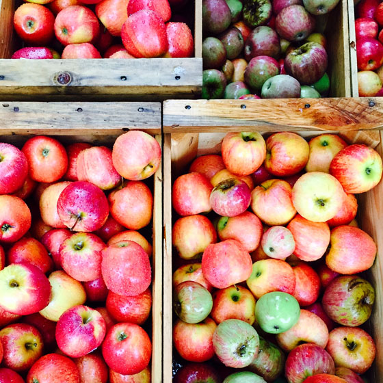 Oak Glen Apples