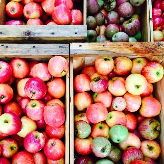 Oak Glen Apples