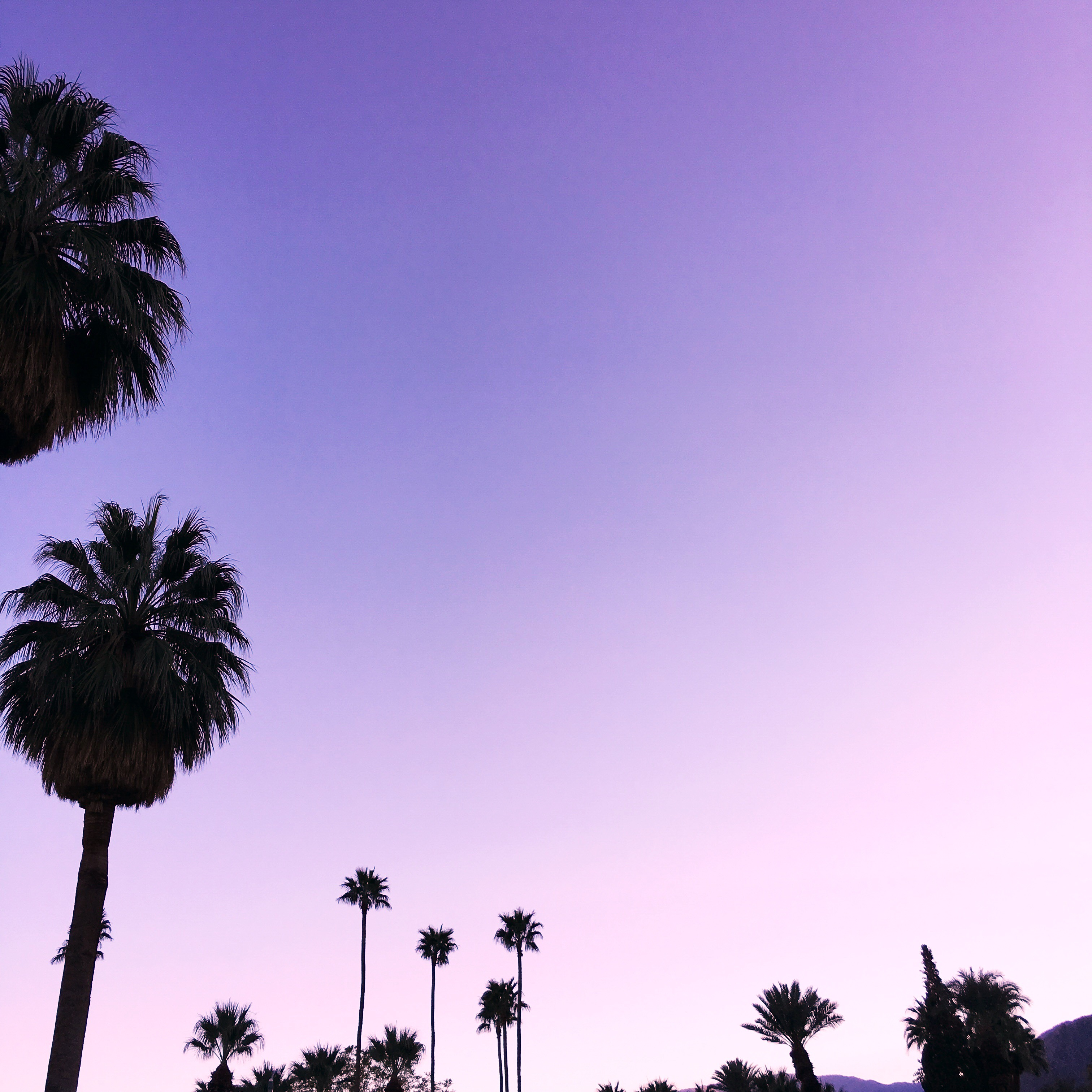 I'm moving! To Palm Springs! – Melodrama