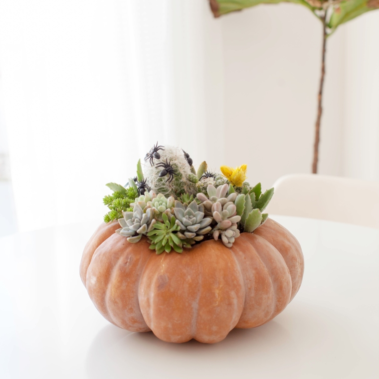 Cinderella Succulent and Cacti Planter for fall