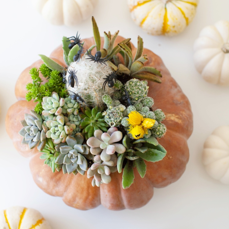 Use a pumpkin as a planter for succulents and cacti.jpg